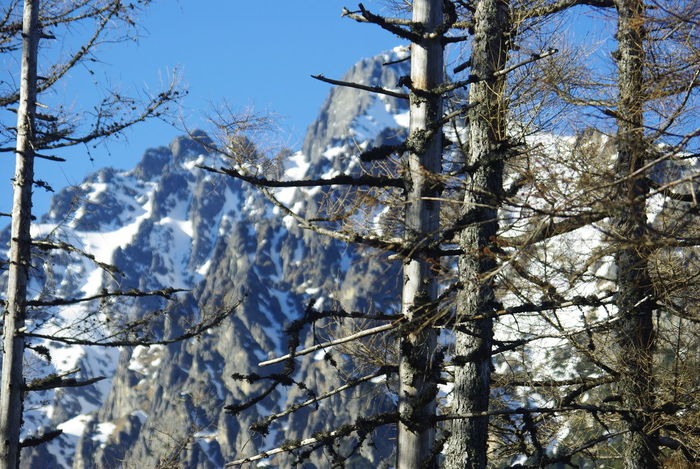 Abstract Composition Bare Tree Bare Trees Beauty In Nature Branch Cold Temperature Focus On Foreground Larch Trees Mountain Mountain Range Nature Park  Old Trees Snow Snow On Mountains Sunlight Tranquility Wild Nature Winter