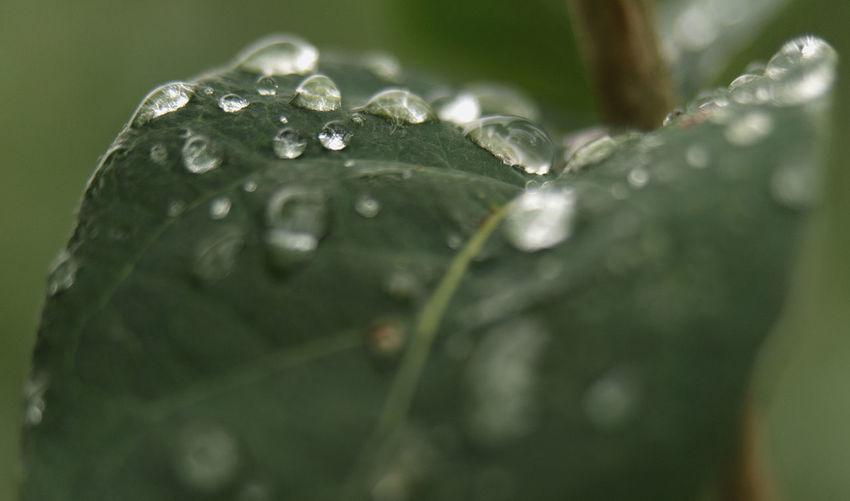 Drop Plant Part