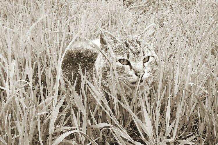 Кот в траве. кошки портрет монохром Cats Monochrome Portrait