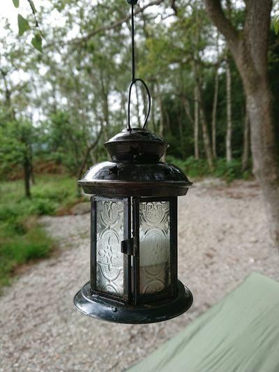 Close-up of lantern hanging on tree