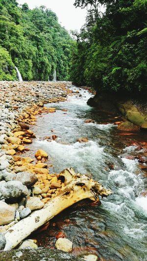 río Toro |