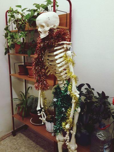 в кабинете биологии всем весело с: School Before New Year Funny