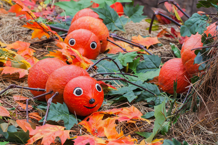 Decorative centipede from natural pumpkins, bright decorations for the autumn holidays Autumn Centipede Decor Halloween Thanksgiving Animal Animal Themes Carved Caterpillar Close-up Cute Day Fall Fan Food Leaf Nature No People Orange Color Outdoors Plant Plant Part Pumpkin Red Representation