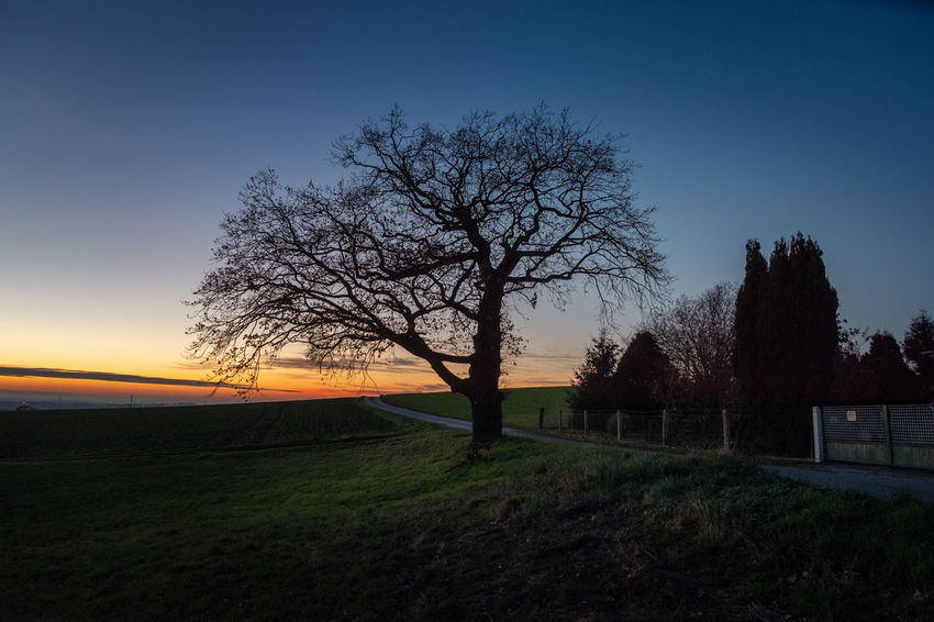Tree Sky Plant Nature Tranquility Bare Tree Land Field Sunset Tranquil Scene Landscape Environment Scenics - Nature Beauty In Nature No People Silhouette Non-urban Scene Outdoors Road Grass