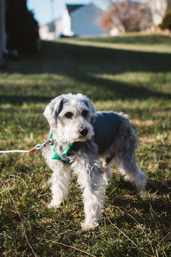Animal Themes Close-up Day Dog Domestic Animals Full Length Grass Mammal Nature No People One Animal Outdoors Pets