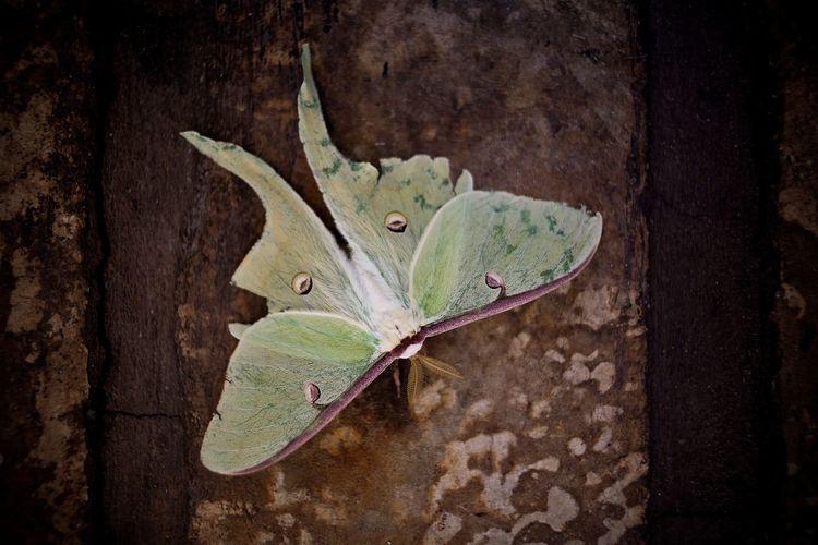 The Moth Leaf