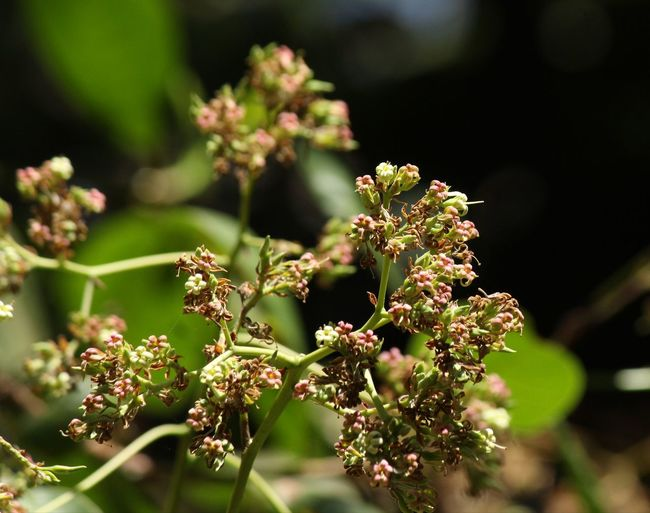 Close-up of flowering plant
