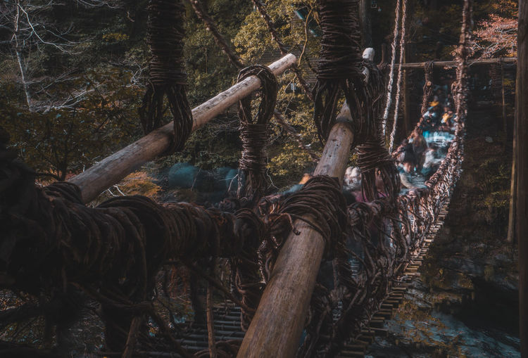 Rope bridge against trees in forest