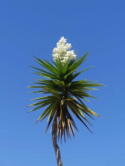 Tropical Plant,
