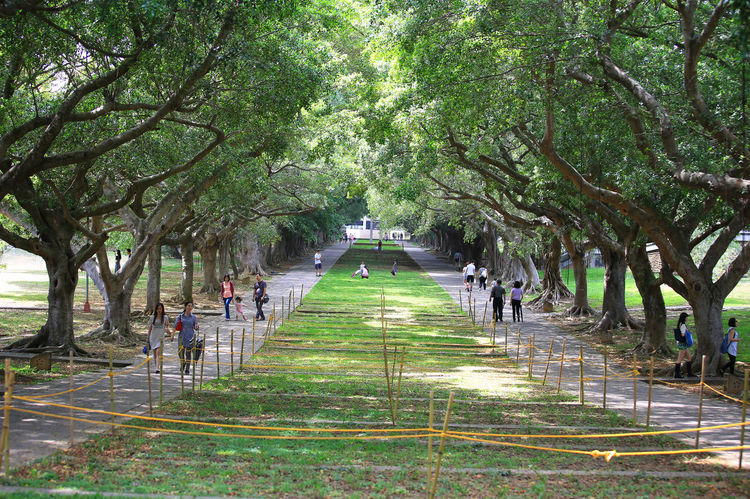 Tunghai University Green Taichung Taiwan Travel Photography Tree Tunghai University Beauty In Nature Growth Large Group Of People Nature Outdoors People The Way Forward Tranquility Tree Walkway