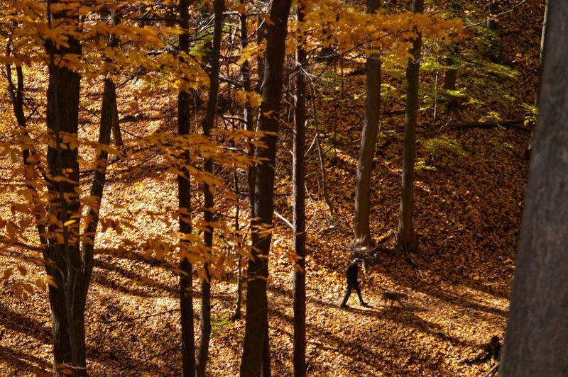 Fall walk. Autumn colors Outdoors Nature Nikon Photography Nikon D3200 Sunny Day Tree Forest Tree Trunk Tree Area Sunlight WoodLand Woods Fallen Tree Sunrays Capture Tomorrow