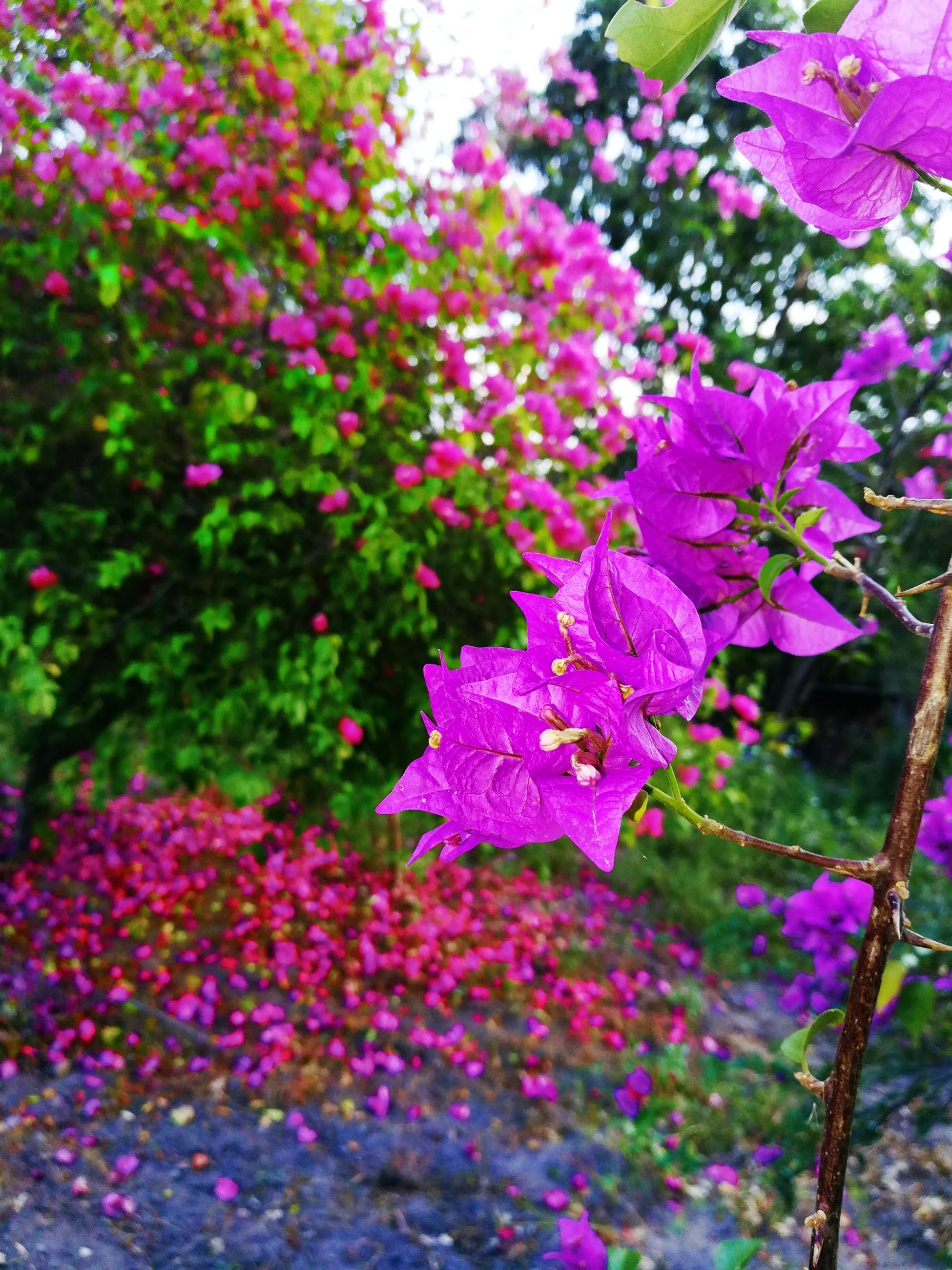 growth, flower, nature, beauty in nature, plant, fragility, purple, no people, freshness, blooming, pink color, outdoors, petal, leaf, day, close-up, flower head