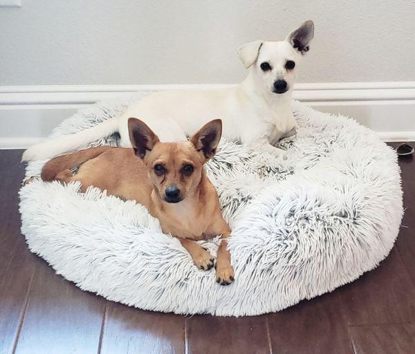 Cute pups, Jade