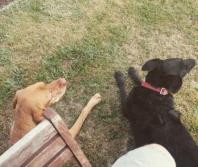 Hunde Pets Dog Animal Themes Outdoors Sitting No People Hundefotografie Hunde Liebe ♡ Hunderunde Hundeleben Hundeportrait Hundefreundschaft Saarlouis Geilestes Bundesland Saarland