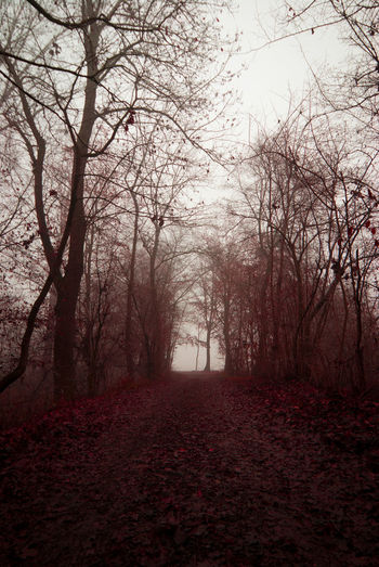 Red autumn Nature Tree No People Beauty In Nature Outdoors Tranquility Red Colors Landscapephotography Vertical Beautiful Colors Nikon Red Autumn Leaves Fog The Great Outdoors - 2017 EyeEm Awards