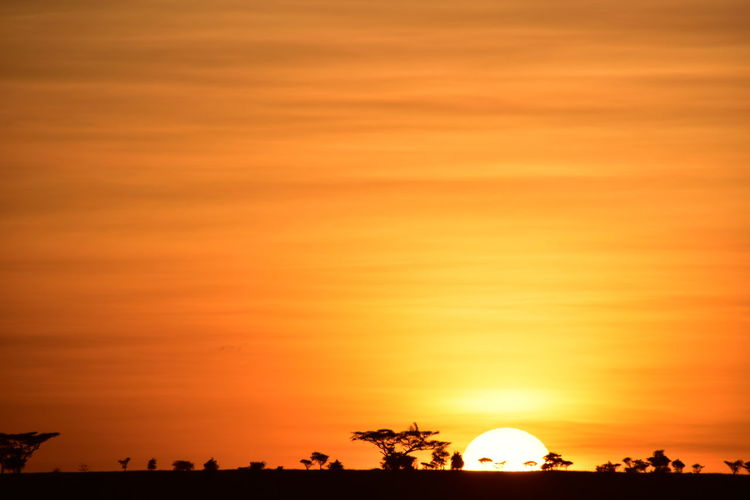 43 Golden Moments Africa Beauty In Nature Nature Orange Color Sunset Tanzania Tranquil Scene Tree