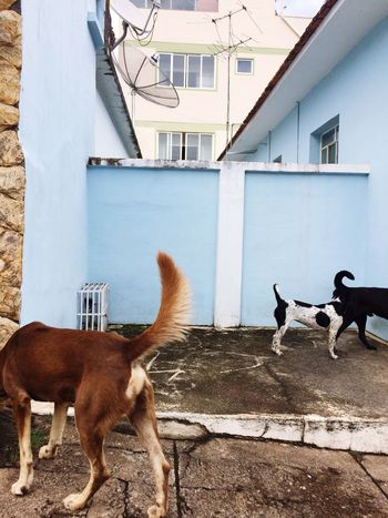 Animal Themes Built Structure Domestic Animals Mammal Architecture Building Exterior No People Standing Day Outdoors Pets Togetherness
