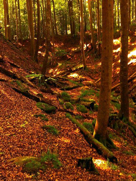 Weltkulturerbe - Buchenw Taking Photos Hello Worldälder Rügen Hanging Out