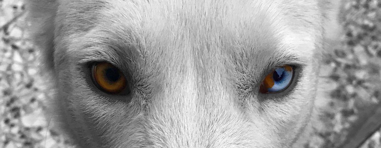 EyeDog Rize