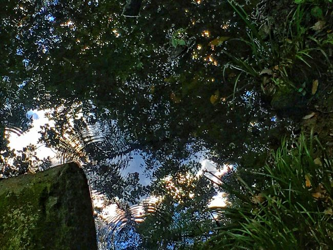 Reflection Water Rippled Tree Leaf Branch Plant Sky Growth Outdoors Nature Tranquility Freshness Beauty In Nature