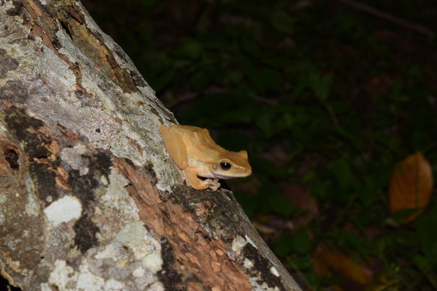 Animal Animal Head  Beauty In Nature Close-up Day Focus On Foreground Jungle Trips Nature Night Time No People Outdoors Rodent Selective Focus Squirrel Tree Trunk Wildlife