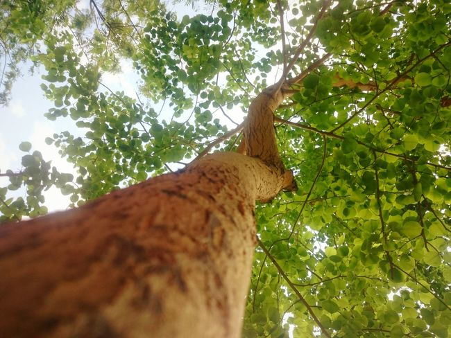 Just a shot i took at the park Nature EyeEm Best Shots Mobile Photography Light Naturallight Shadows Trees Perspective EyeEm New Here Eyeem Trending Top Trending Pro Shots. Featured Eyeem Best Picks. Weekly Top Picks