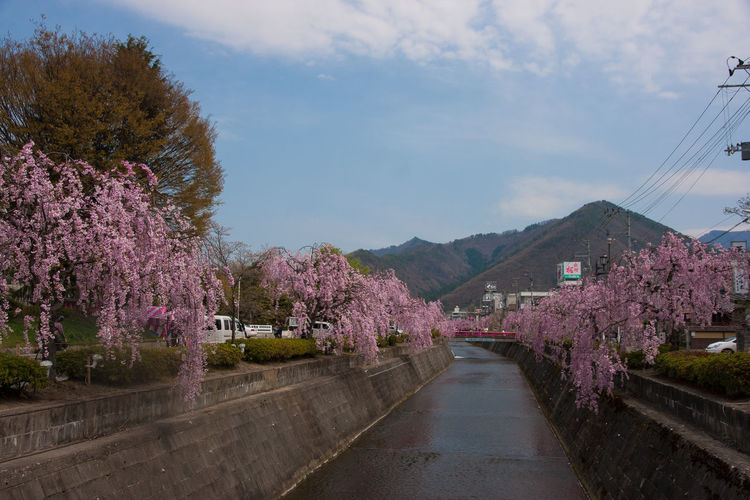 Beauty In Nature Blossom Blue Sky Day Flower Growth Japan Landscape Mountain View Nature No People Outdoors Pink Color Road Sakura Sakura By The River Scenics Sky Spring Tohoku Travel Destinations Tree Water Water Canal YAMAGATA