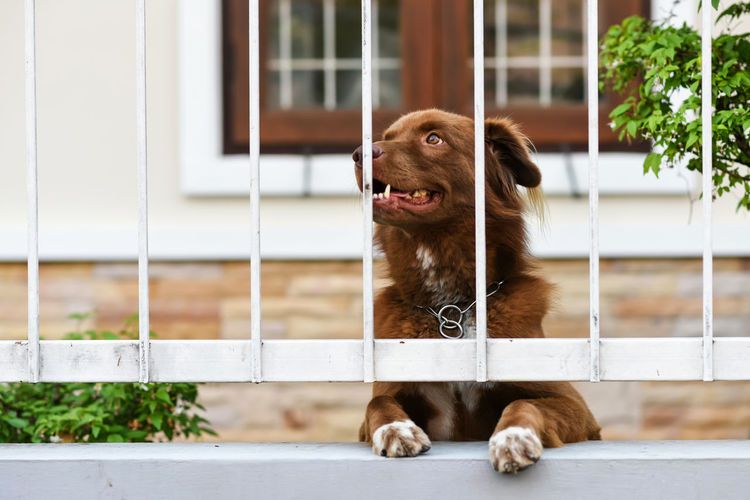 Dog looking away at fence wall