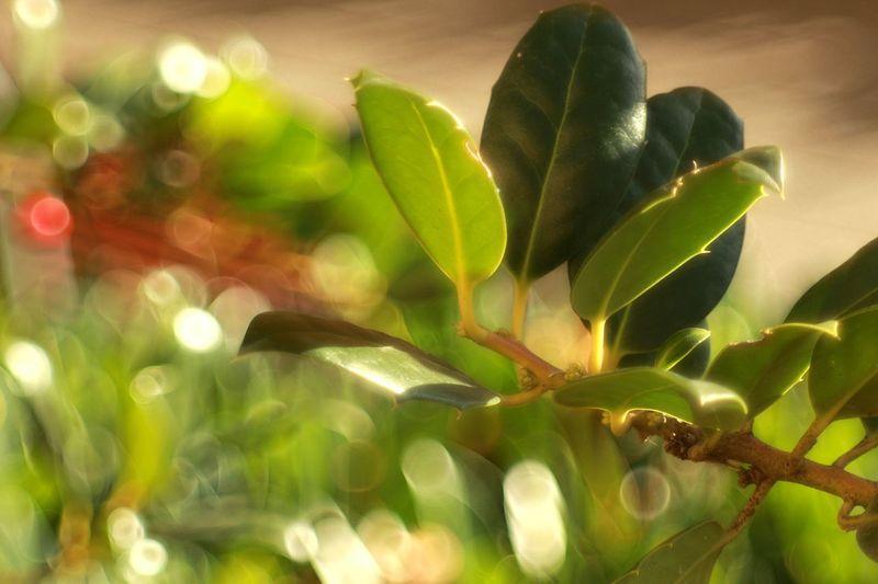 Plant Leaf Nature Beauty In Nature Outdoors Nature Leafphotography Hodmezovasarhely Domiplan Vintage Lens Photography Domiplan 50mm Meyer-Optik-Görlitz Leafy Vintage Lens On Modern Camera Psychedelic Bokeh Photography Bokehlicious Bokeh Bubble Bokeh Green Color No People Vintage Lenses Domiplan 50mm/f2.8 Green Color Defocused