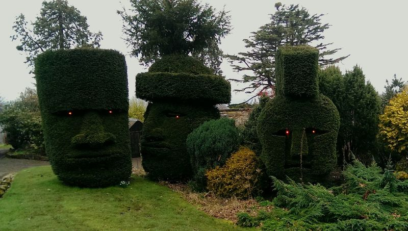 Came accross these spectaculer hedges on my travelles the other day Hedges Hedge Taking Photos Cool Art Garden Garden Photography Spartan Easterislandhead Myanmar Gardening Hedgerow Check This Out