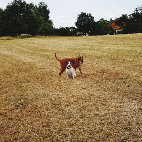 Best friends👏👏 Dogs Jack Russell Terrier Belgischerschäferhund Agriculture