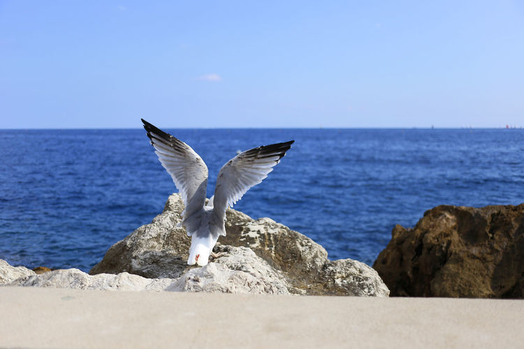 Animal Body Part Animal Themes Animal Wildlife Azure Beauty In Nature Bird Côte D'Azur Day Horizon Over Water Monaco Nature No People One Animal Outdoors Sea Seagull Sky Spread Wings Travel