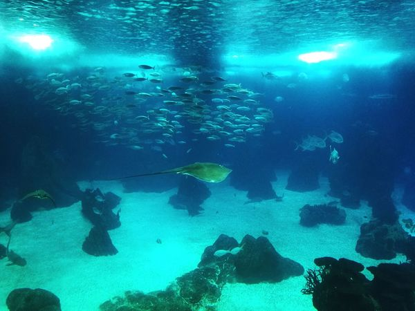 Underwater Fish UnderSea Sea Sea Life Water Blue Swimming Backgrounds Scuba Diving Underwater Diving Beauty In Nature Nature Animal Themes No People Freshness Day Oceanario Lisboa Oceanariodelisboa HuaweiP9