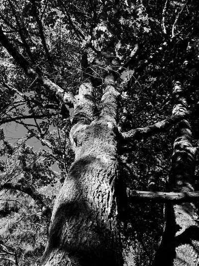 Tree Tree Trunk Low Angle View Nature Day Growth Forest No People Branch Outdoors Beauty In Nature Animal Themes Mammal The Week On EyeEm