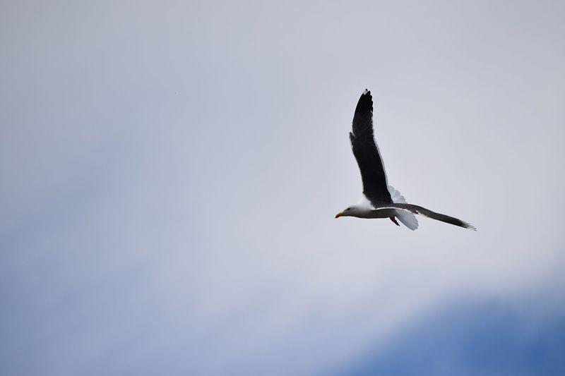 Taking Photos Seagull Nikon D5500