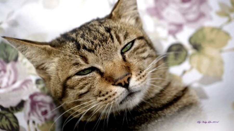 Cat♡ 午後睏喵咪。。。ㄎㄎㄎ Drinking A Latte Peace And Love Enjoying Life