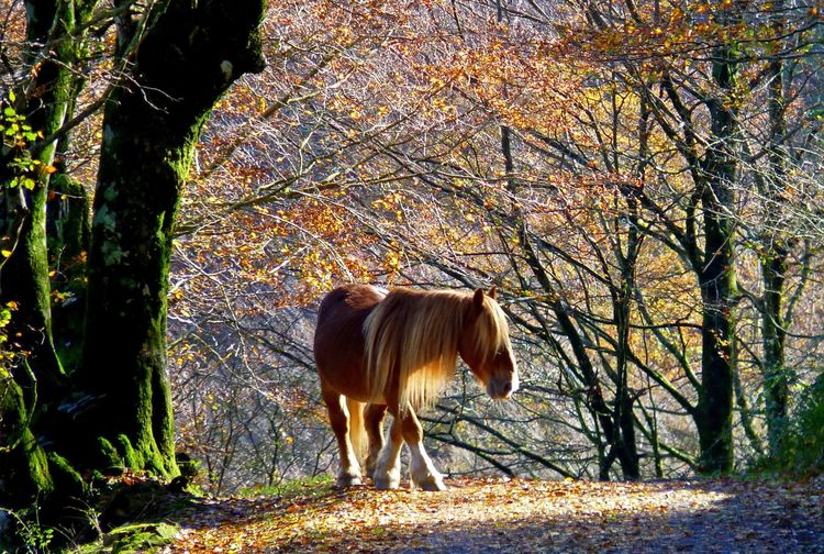 Animal Themes Beauty Beauty In Nature Beuty Of Nature Day Domestic Animals Horse Light Love Nature Mammal Nature No People One Animal Outdoors Standing