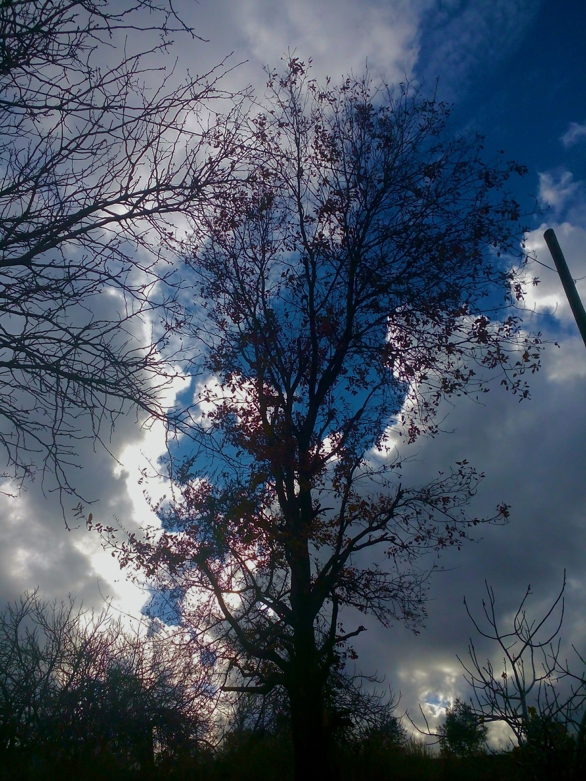 sky, cloud - sky, tree, nature, sunset, no people, close-up, outdoors, silhouette, low angle view, branch, beauty in nature, day