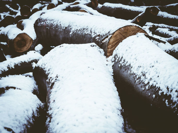 Close-up of snow covered log