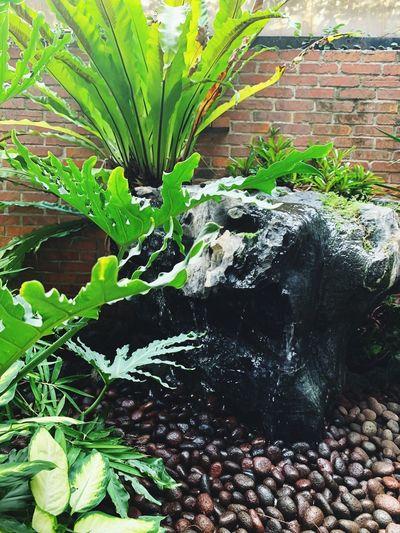 澗綠 Growth Green Color Nature Water Plant Day Plant Part