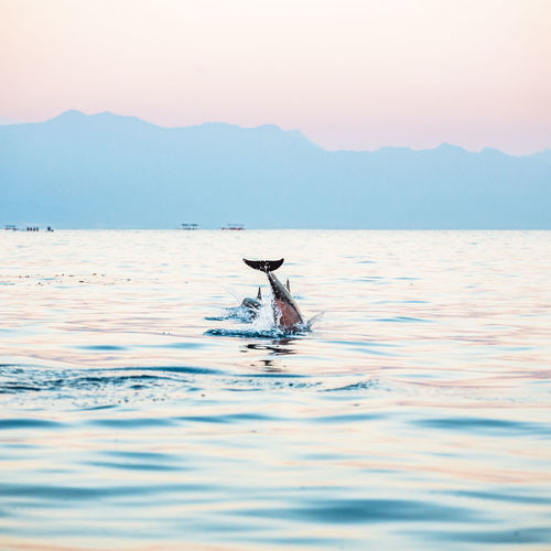 Animal Wildlife Animals In The Wild Bali, Indonesia Beauty In Nature Culture Dolphin Landscape Mammal Nature Nature Oceanside One Animal Outdoors Sky Sunset Sunshine Traditional Water Waterfront Whale