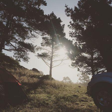 Camping Morning Relaxing Enjoying Life Beautiful Outdoor Photography Nature Nature Addict Trees Grass