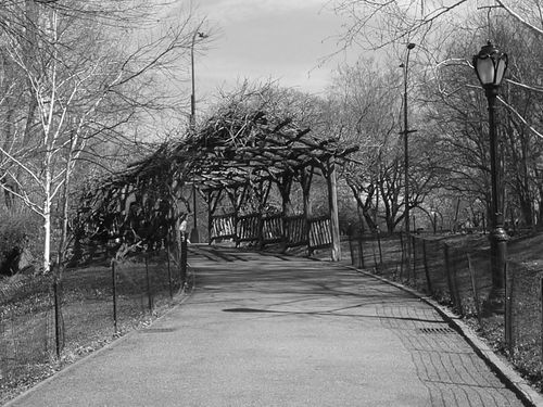 Central Park New York City A Walk In The Park Black And White Photography Landscape_photography