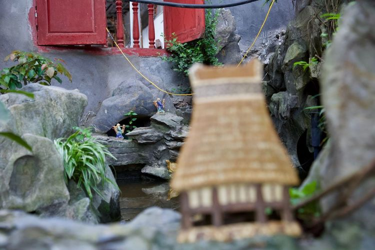 Inside Ngoc Son Temple Architecture Built Structure Close-up Day Flowing Water Focus On Background Fuel And Power Generation Gutter Motion Nature No People Outdoors Plant Rock Rock - Object Selective Focus Solid Tree Water Wood - Material