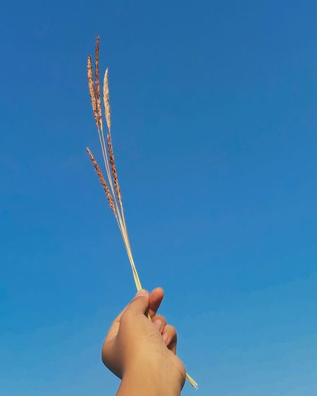 Low angle view of hand holding plant against clear blue sky