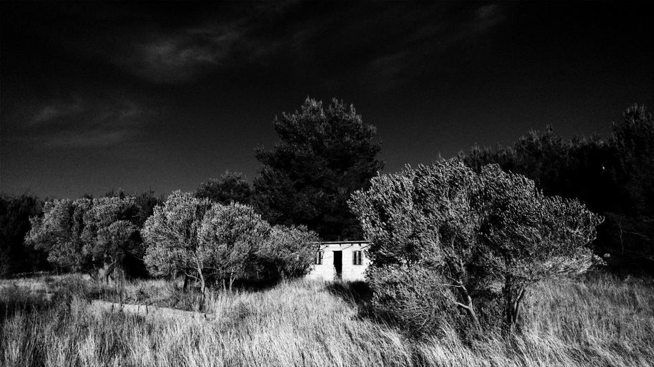 EyeEm Best Shots EyeEmNewHere Blackandwhite The Week on EyeEm Dramatic Old Hause Tree Sky