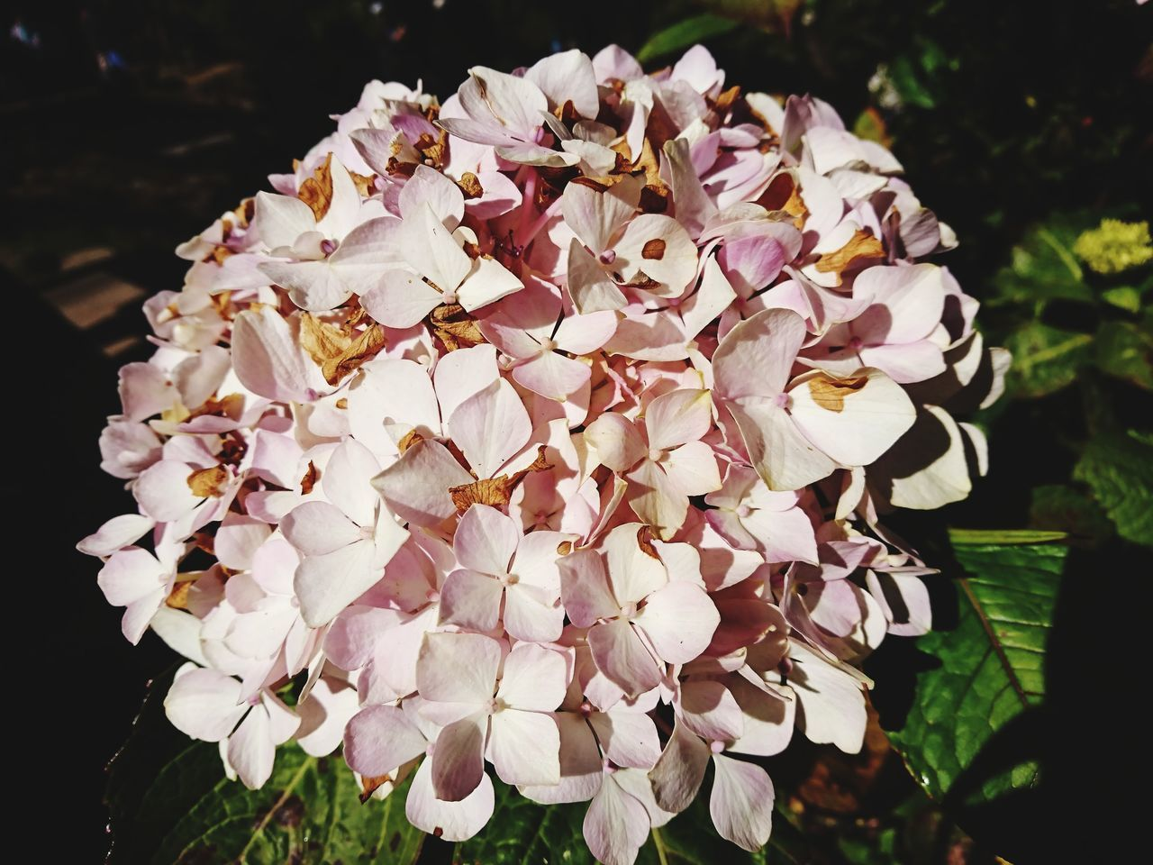 CLOSE-UP OF FRESH WHITE PINK FLOWERS