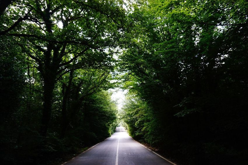 Adapted To The City Nature The Way Forward Tree Beauty In Nature Road Tranquil Scene Forest EyeEmNewHere EyeEmNewHere