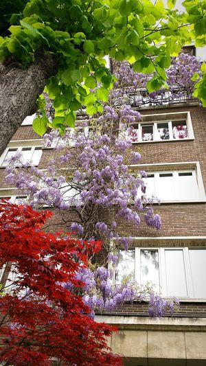 Flowers Spring Flowers Urban Flowers Urbanflowers Spring2015