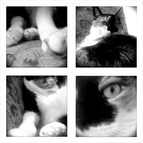 Catsofinstagram Cat Cats Pet pets picoftheday photooftheday